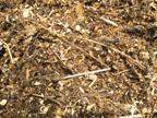 compost_closeup