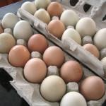The Freshest Eggs!