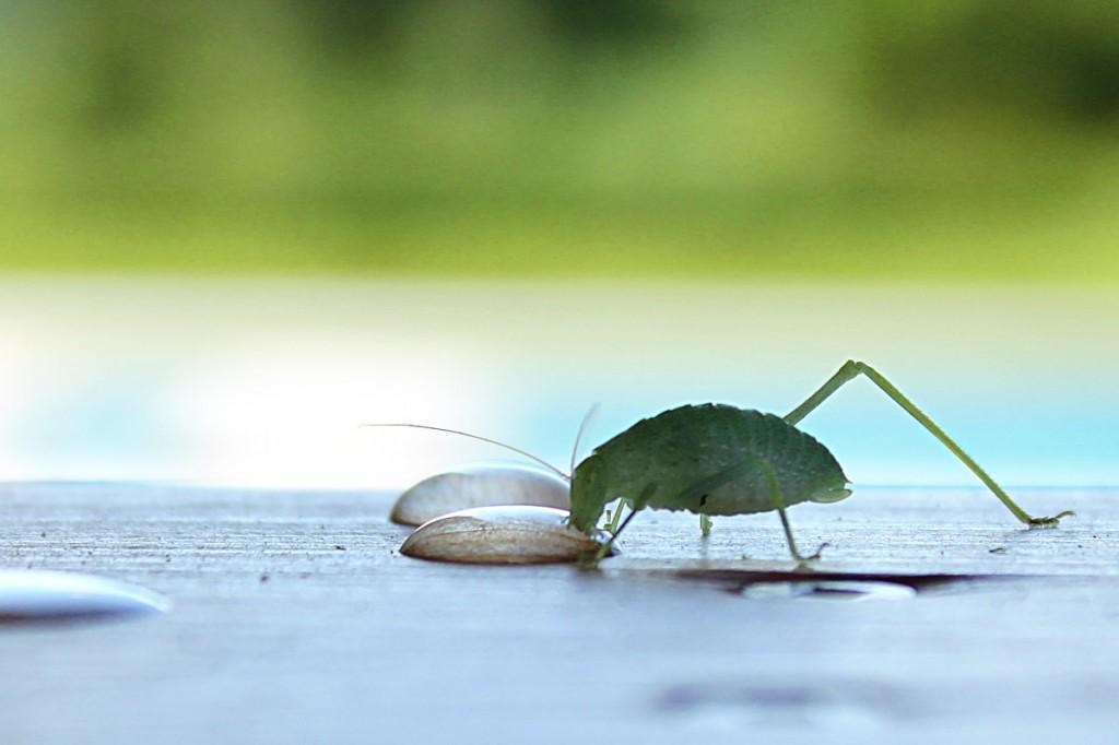 bug drinking!