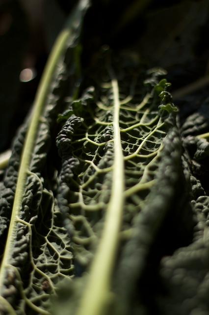 black tuscan kale