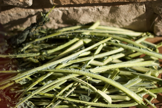 my 2-hour pile of kale stems. (removed)
