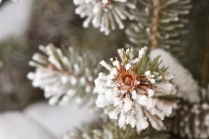 A Menke Christmas Retrospective