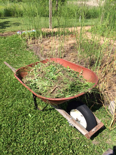 I don't know if it makes any difference, but I don't throw weeds in the compost. I let it rain into the wheelbarrow, then wait for them to start to decompose, then wheel them into the woods. Why don't I do it right away?