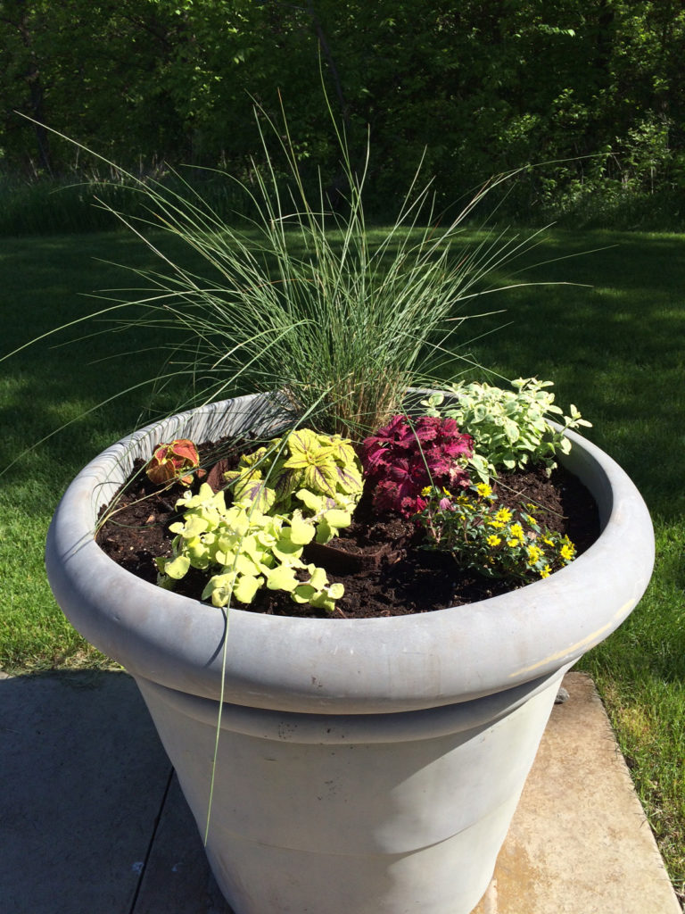 Planted giant pot